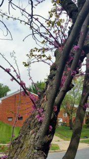 Tree Flowers 1